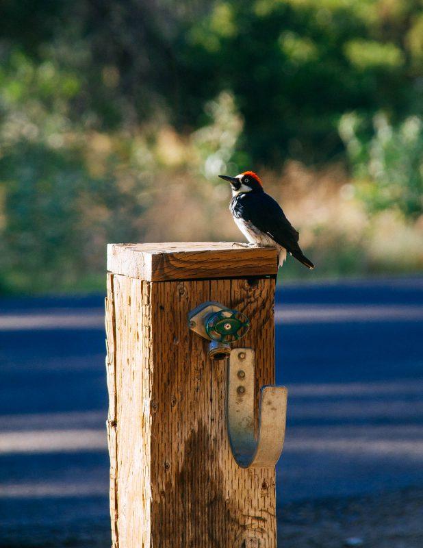 Bird at Cuyamaca