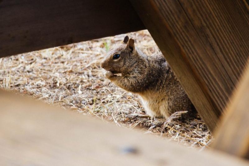 Wildlife Squirrel Photo