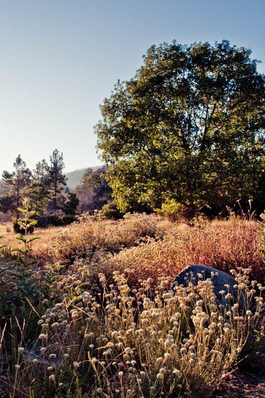 Cuyamaca Rancho Photo Location