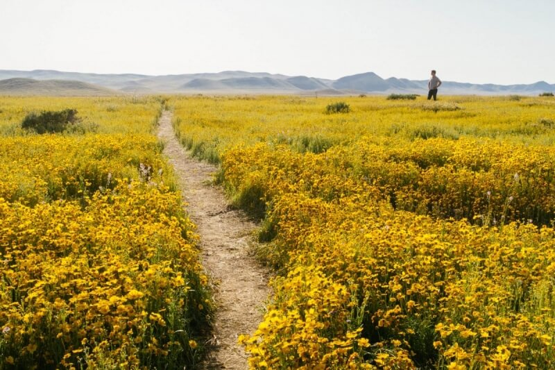 Wildflower Superbloom Central Coast California