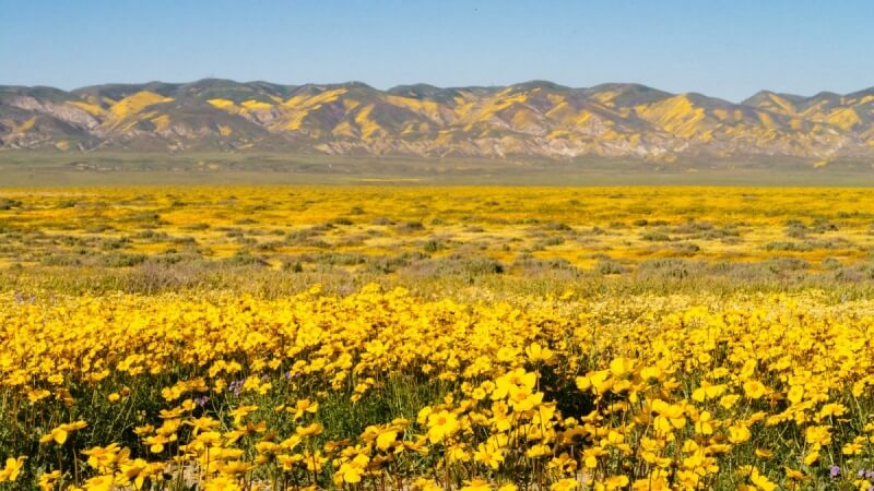 Carrizo Plain Superbloom photography guide