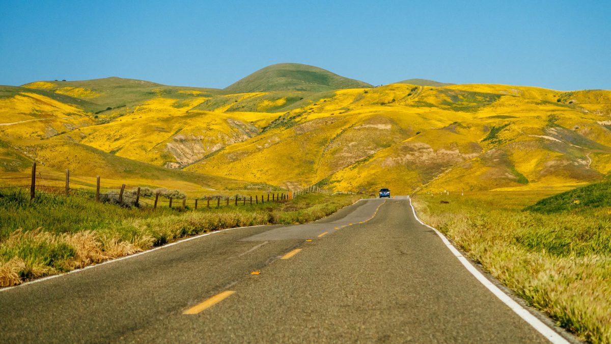 Road to Temblor Range wildflowers