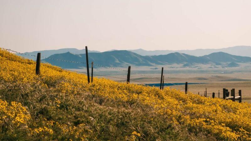 Wildflowers at Temblor Range near San Luis Obispo