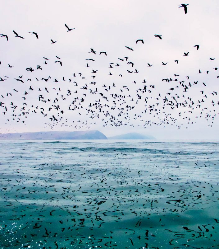 360 degree birds of Ballestas