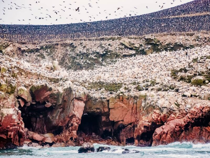 Birds at Ballestas Islands