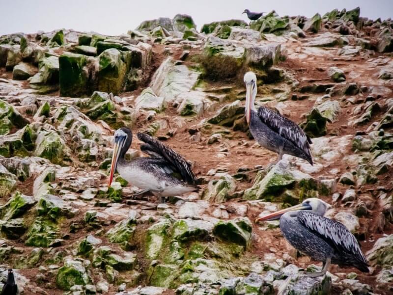 Ballestas Islands Photo Guide