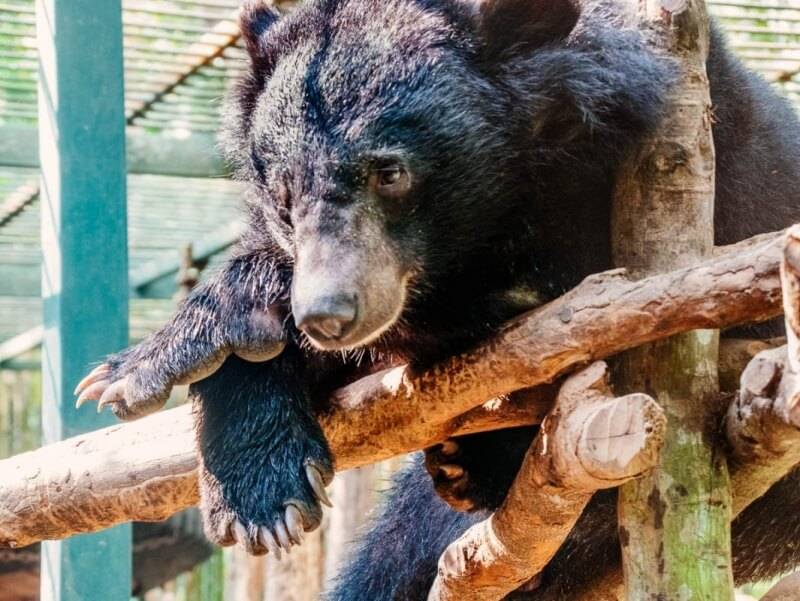 Tat Kuang Si Bear Rescue Center