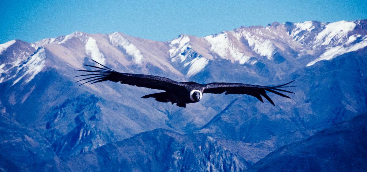 Cruz Del Condor Viewpoint See The Andean Condor Flying Sidecar Photo